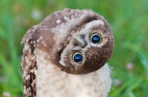 130207.owl.jpg