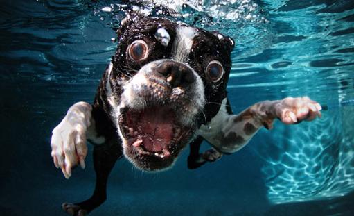 130601.dog-in-water-cnn.jpg