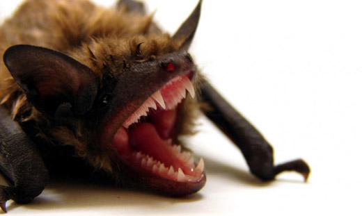 130813.bat.jpg