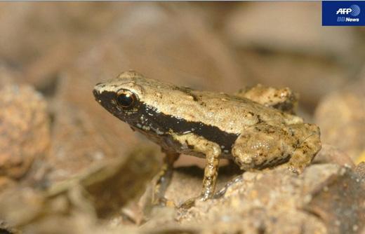 130902.frog.jpg