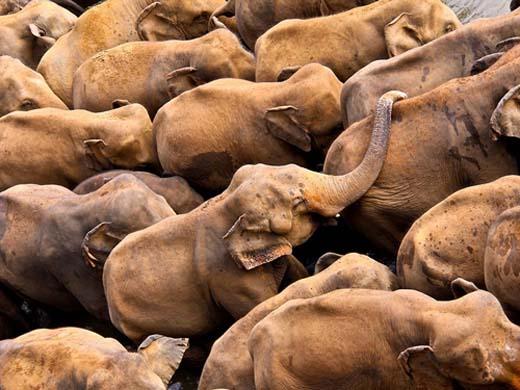 131203.elephant-orphanage.jpg