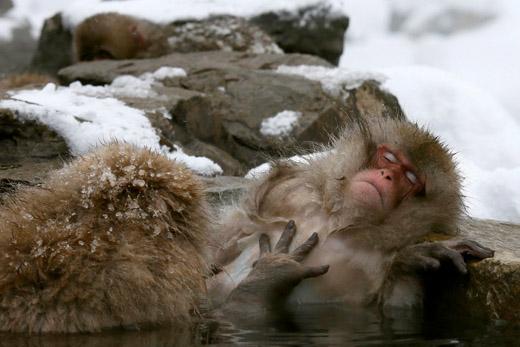 140118.monkey-epa.jpg