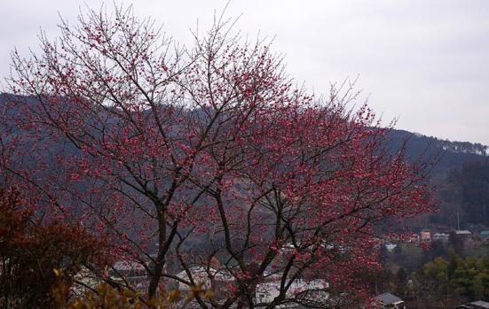 140401.yoshino01.jpg