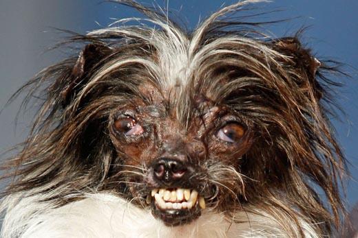 150632.ugly-dog.jpg