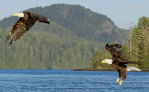 160802.eagle1.jpg