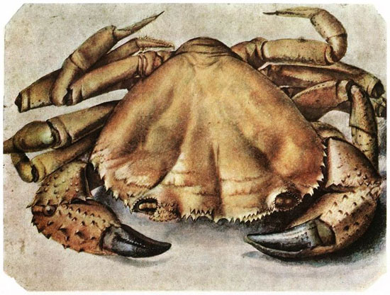durer203.crab.JPG