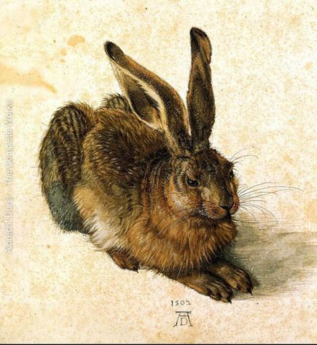 durer233.Young-Hare.jpg